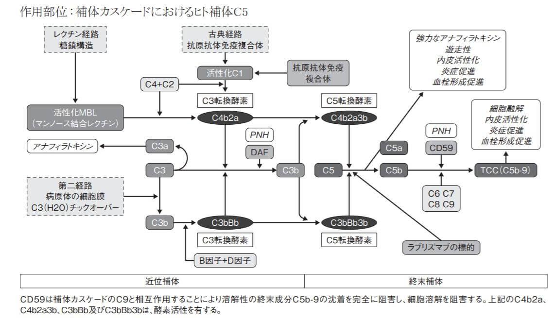 ユルトミリス作用機序(補体カスケード)