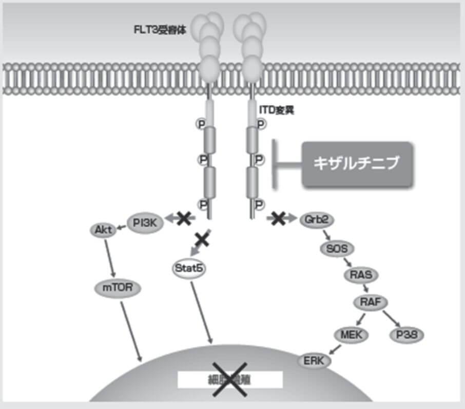 ヴァンフリタ錠の作用機序