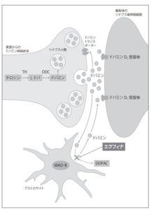 エクフィナ錠の作用機序